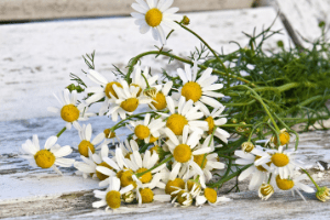 Chamomile Tea Benefits For Babies and Toddlers