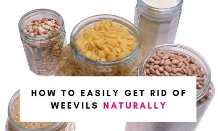 How To Get Rid Of Weevils Naturally
