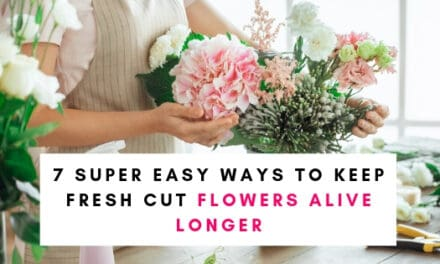 Super Easy Ways To Keep Fresh Cut Flowers Alive Longer
