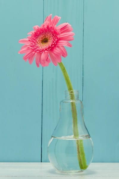 Pink Flower In Vase