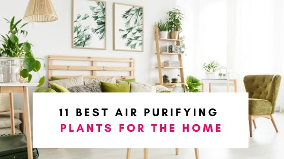 11 Best Air Purifying Plants For The Home